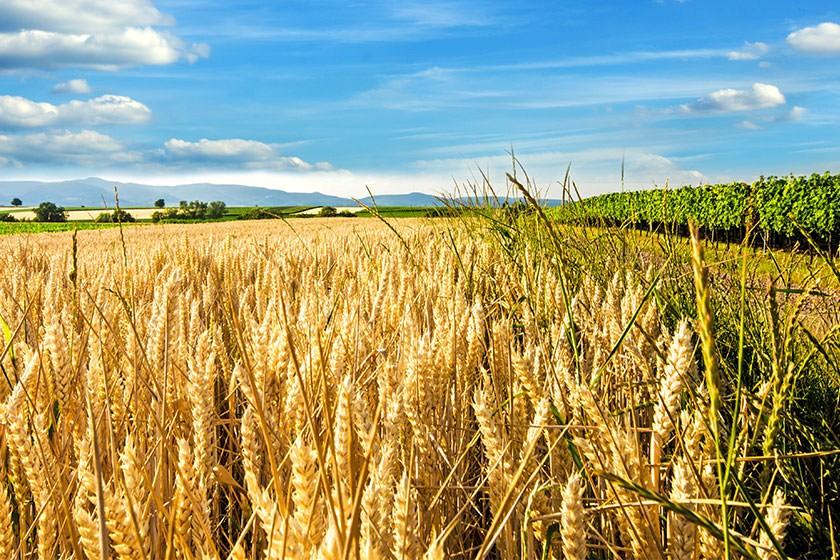 Ausschreibungen & Aufträge für die Landwirtschaft & Forstwirtschaft