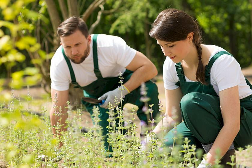 Ausschreibungen für Grünflächenpflege und Mäharbeiten
