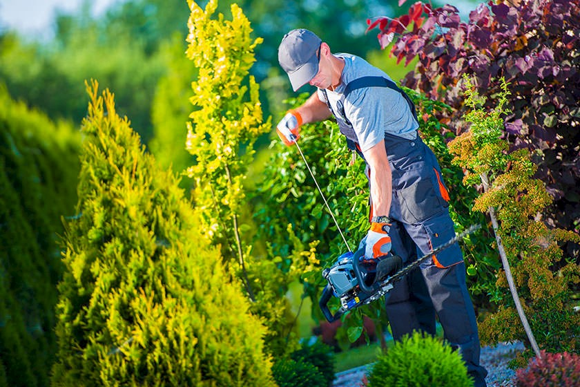 Ausschreibungen für Baumpflege, Baumschnitt & Baumfällarbeiten